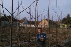 paulovnija-sadnice-16